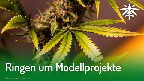 Ringen um Modellprojekte | DHV-Video-News #212
