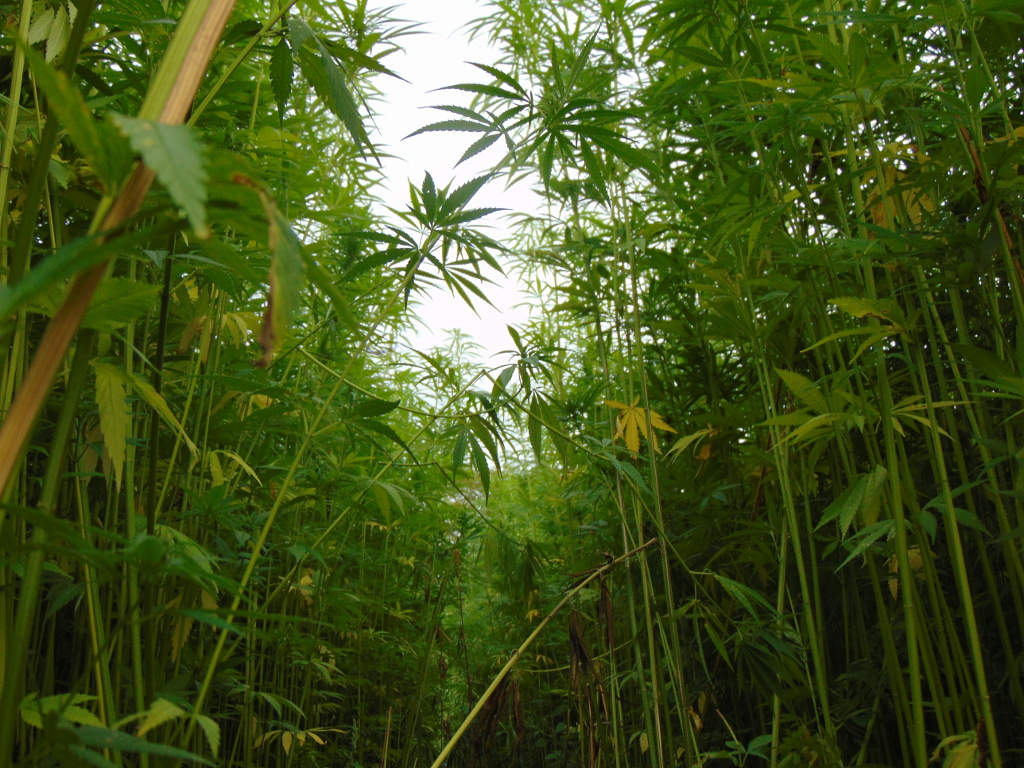 Der Cannabis Social Club gibt seine Neuausrichtung bekannt