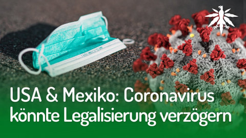 USA & Mexiko: Coronavirus könnte Legalisierung verzögern | DHV-Audio-News #243