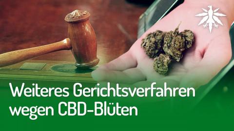 Weiteres Gerichtsverfahren wegen CBD-Blüten | DHV-Audio-News #248