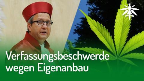 Verfassungsbeschwerde wegen Eigenanbau | DHV-Audio-News #253