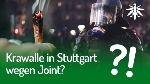 Krawalle in Stuttgart wegen Joint? | DHV-Audio-News #254