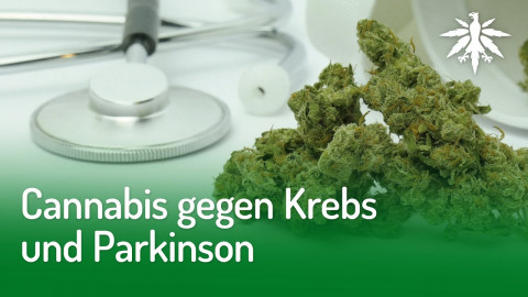Cannabis gegen Krebs und Parkinson | DHV-Audio-News #265