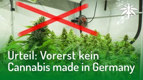 Urteil: Vorerst kein Cannabis made in Germany | DHV-Audio-News #159