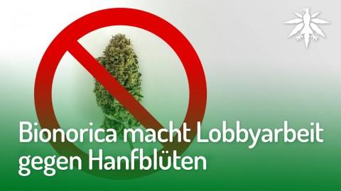 Bionorica macht Lobbyarbeit gegen Hanfblüten | DHV-Audio-News #161