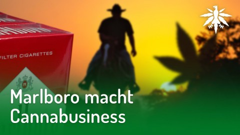 Marlboro macht Cannabusiness | DHV-Audio-News #187