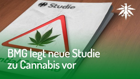 BMG legt neue Studie zu Cannabis vor | DHV-Audio-News #147