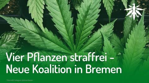 Vier Pflanzen straffrei – Neue Koalition in Bremen | DHV-Audio-News #211