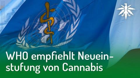 WHO empfiehlt Neueinstufung von Cannabis | DHV-Audio-News #194