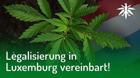 Legalisierung in Luxemburg vereinbart! | DHV-Audio-News #186