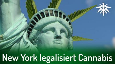 New York legalisiert Cannabis | DHV-Audio-News #287