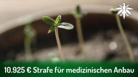 10.925 Euro Strafe für medizinischen Anbau | DHV-Audio-News #289