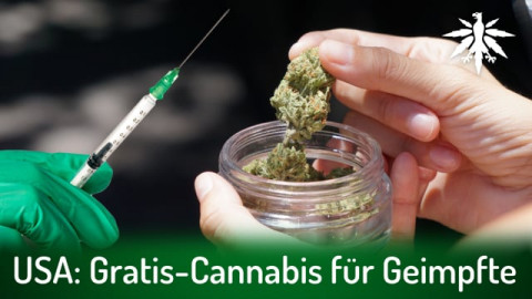 USA: Gratis-Cannabis für Geimpfte | DHV-Audio-News #290