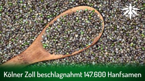 Kölner Zoll beschlagnahmt 147.600 Hanfsamen | DHV-Audio-News #298