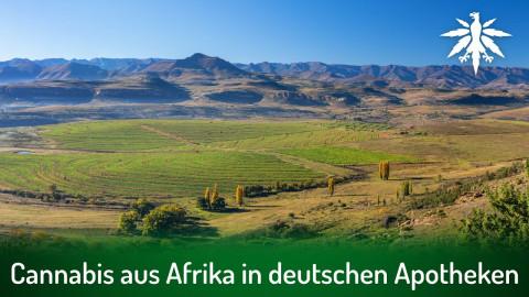 Cannabis aus Afrika in deutschen Apotheken | DHV-Audio-News #302